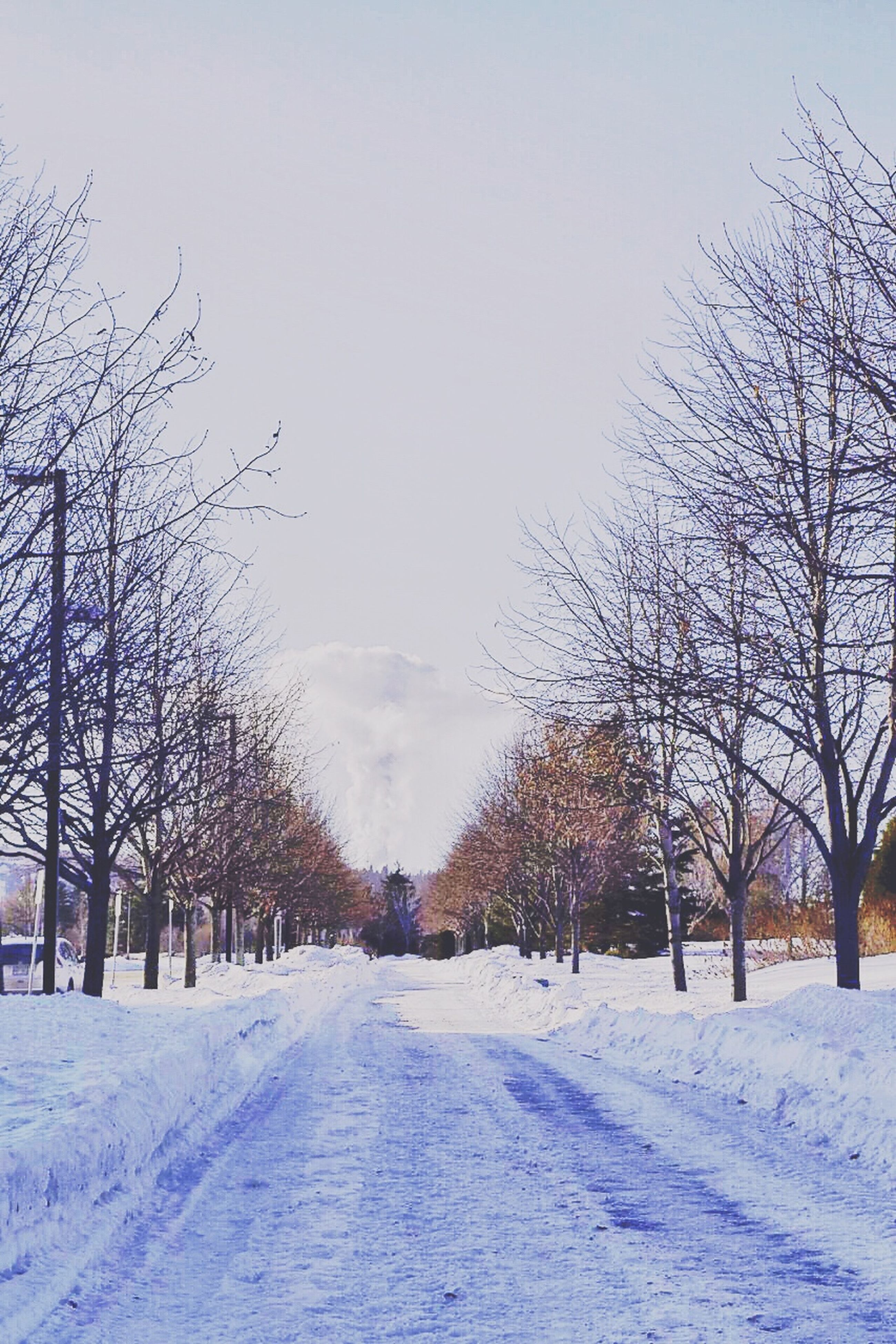 snow, winter, cold temperature, season, weather, tree, bare tree, covering, the way forward, white color, nature, diminishing perspective, covered, tranquil scene, tranquility, frozen, landscape, clear sky, snow covered, road