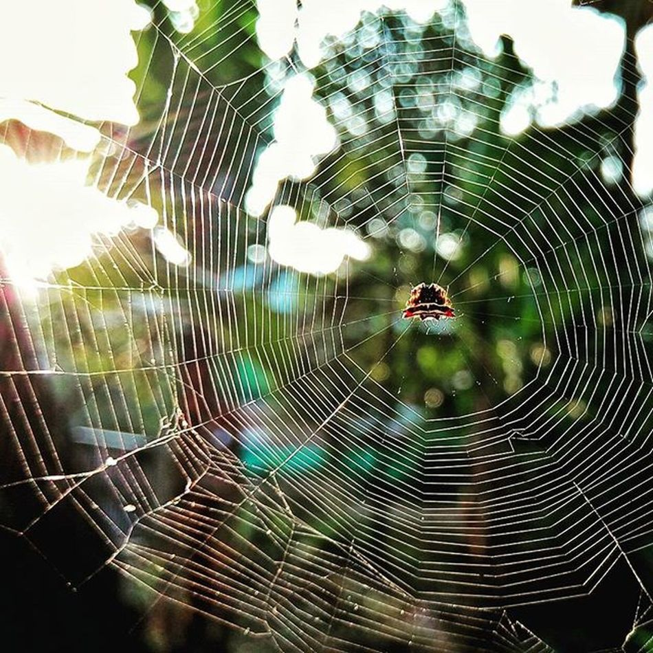 A spider catching some evening sun Nature Photograhy Kerala Kottayam Spider Web Shotwithgionee Gioneeshutterbugs Macro Insect Sunset Instapic