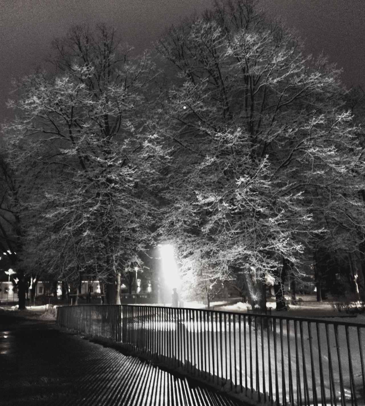 Tree City Night Illuminated Weather Cold Temperature Hello World Snow Enjoying Life Black And White Winter Tranquility