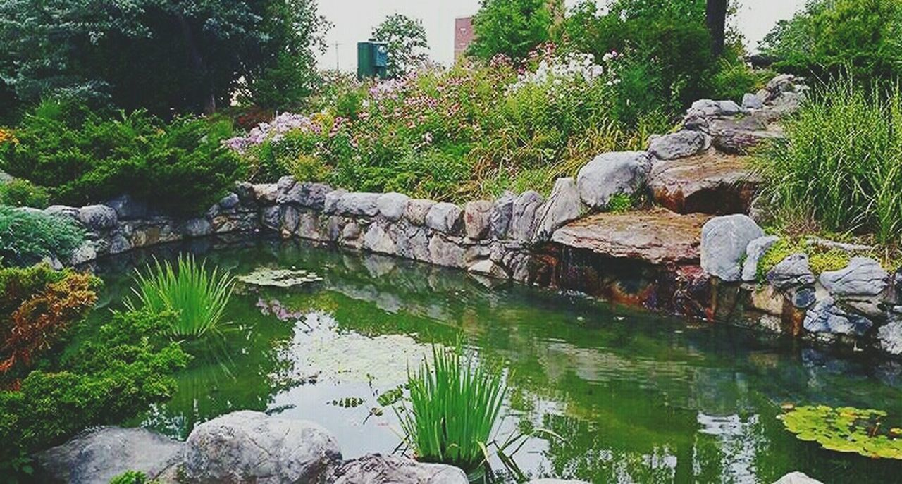Lily Pond Day At The Park  Beautiful Nature EyeEm Nature Lover Nature_collection Check This Out