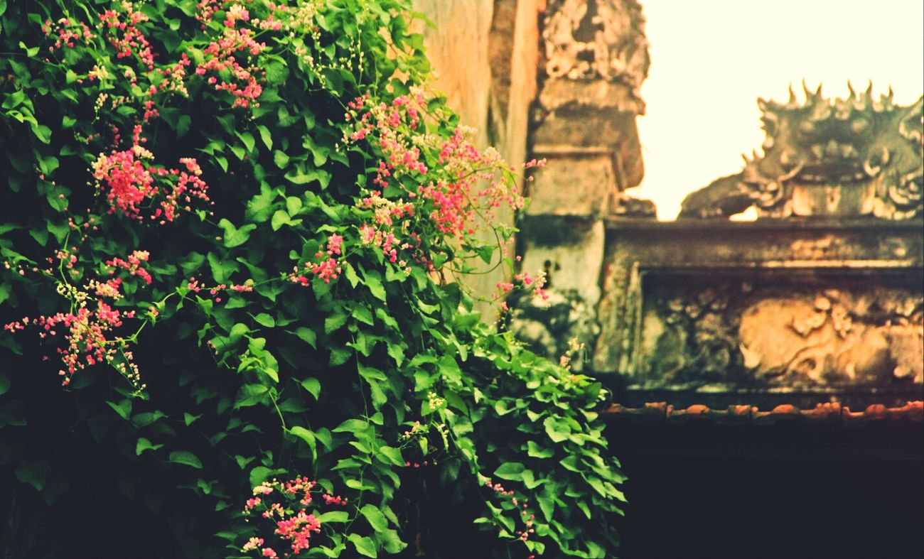 little corner in my country Flowers Oldtown Vietnam Beautiful Hanoi
