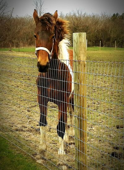 Athena Country Living Animals Bighorse Shesbeautiful Carthorse Horseriding Georgiangrande Horse Coutrylife PicturesFriesian Horselove Horses Horse Photography  Horsepassion Taking Photos Sopretty Horse Life