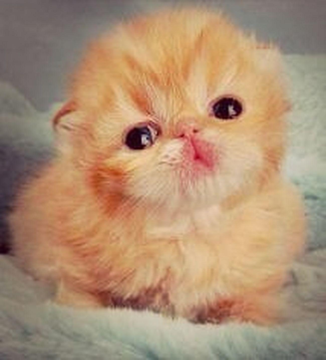 Beutiful Kitten
