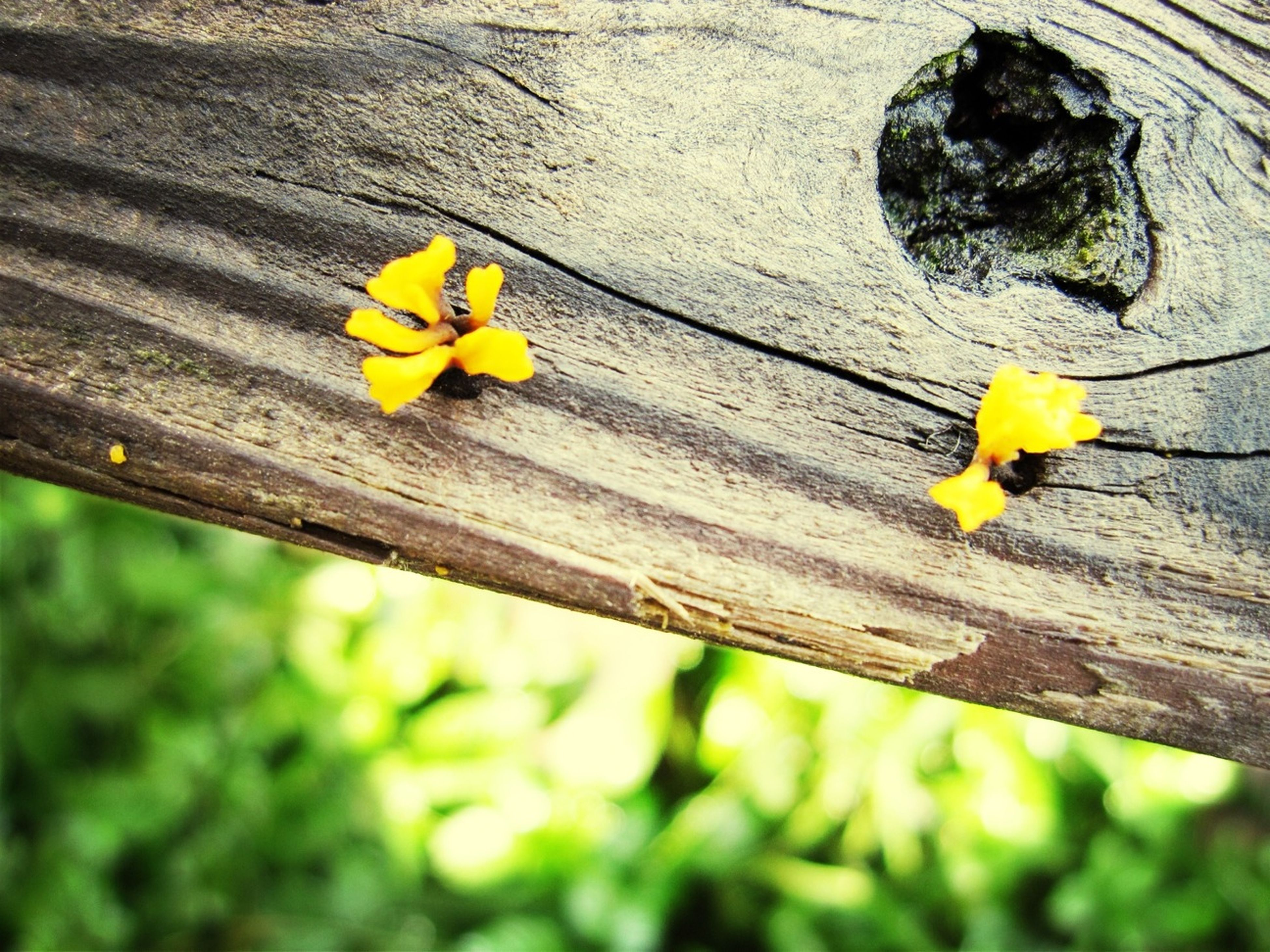 yellow, flower, wood - material, wooden, fragility, leaf, petal, freshness, close-up, growth, wood, nature, day, built structure, plant, plank, outdoors, no people, stem, high angle view