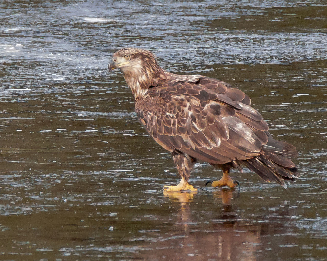 one animal, water, bird, animal themes, animals in the wild, waterfront, animal wildlife, lake, nature, no people, day, outdoors, close-up
