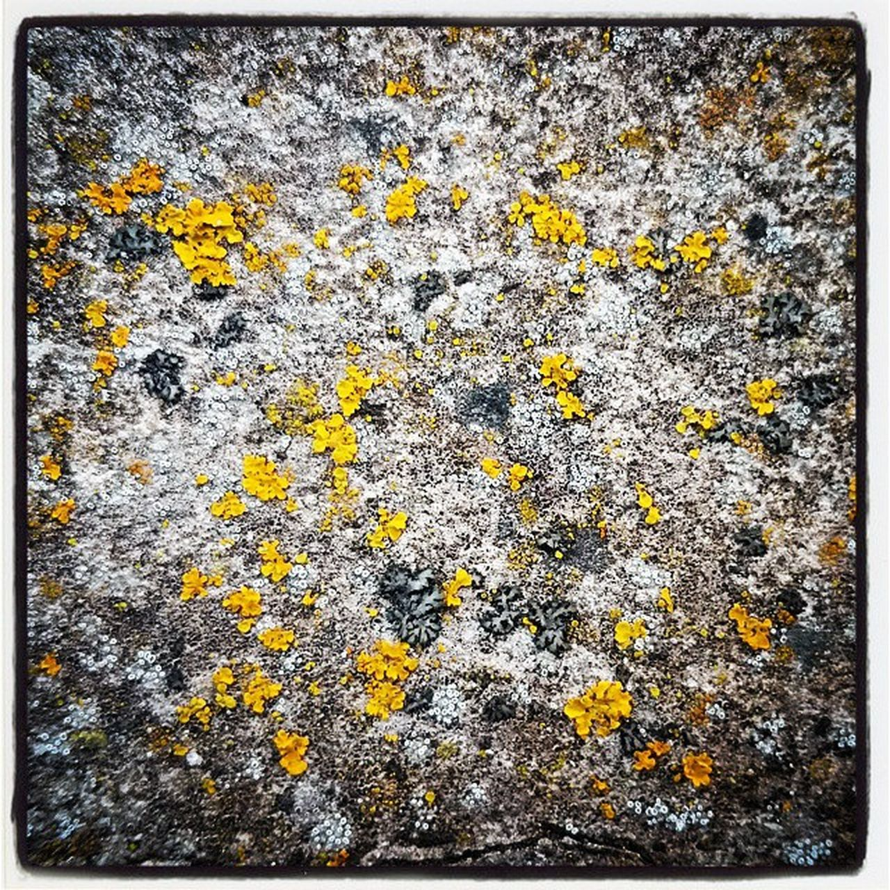 yellow, lichen, backgrounds, flower, full frame, textured, nature, no people, close-up, outdoors, day, growth, fragility, beauty in nature, freshness