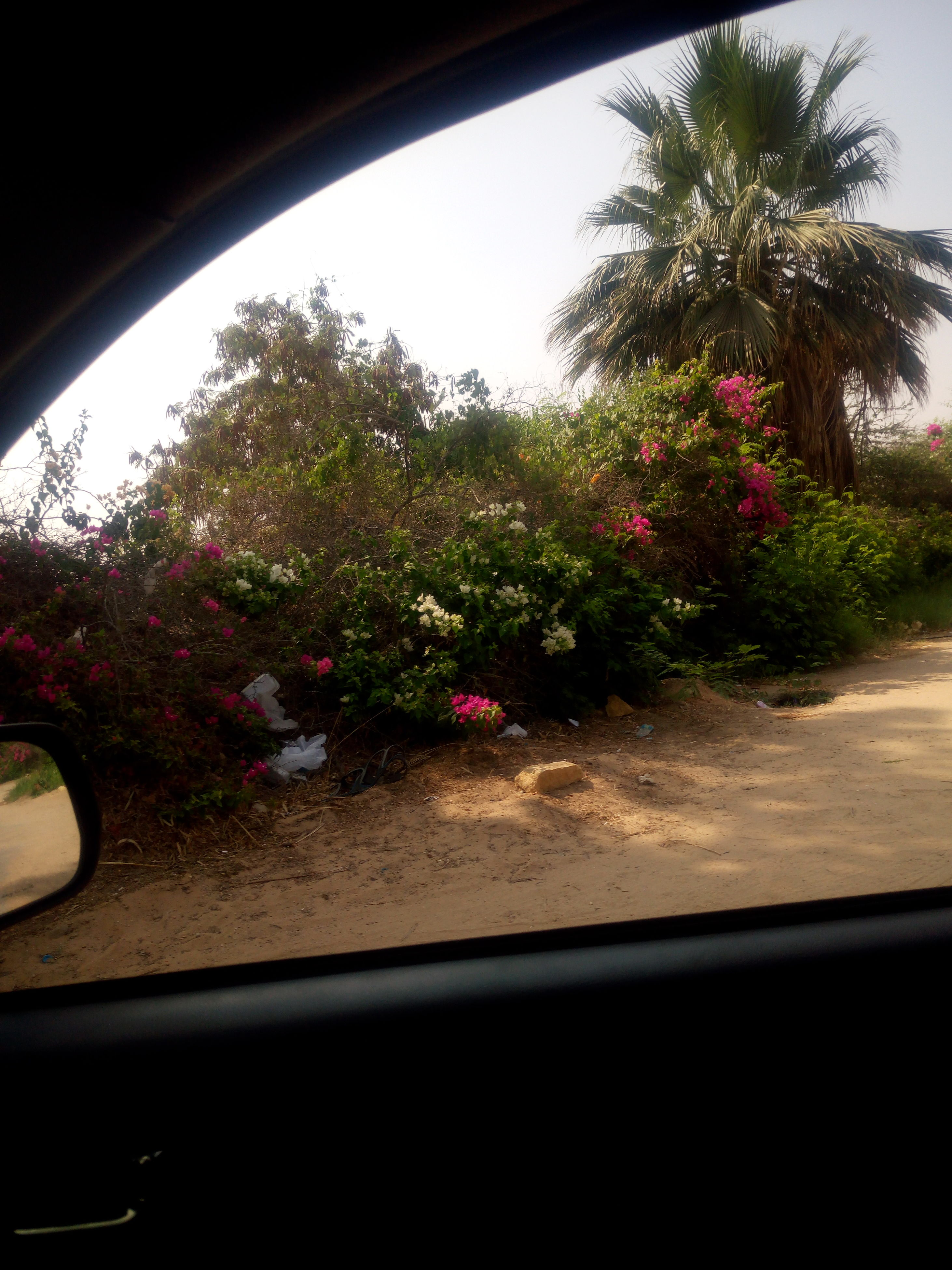 car, transportation, car interior, tree, growth, no people, palm tree, day, nature, flower, indoors, sky
