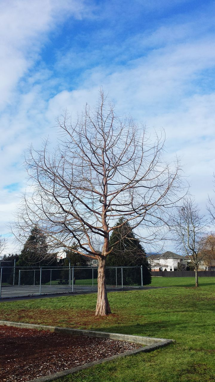 bare tree, tree, architecture, building exterior, house, built structure, cloud - sky, sky, day, grass, outdoors, no people, beauty in nature, nature