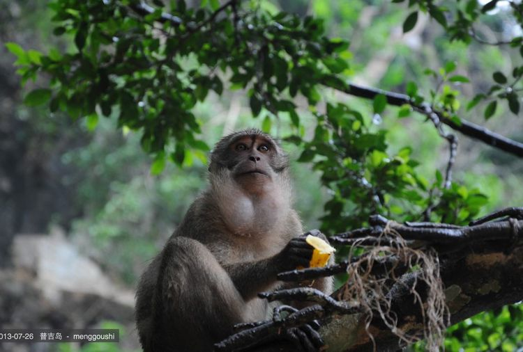 Hello World Relaxing Taking Photos Enjoying Life monkey eye
