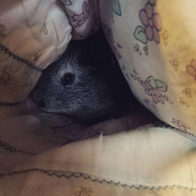 Marceline is hiding Guineapig Marceline