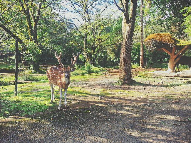 Holiday at Safari Indonedia Enjoying Life Holiday Nature_collection Nice Atmosphere