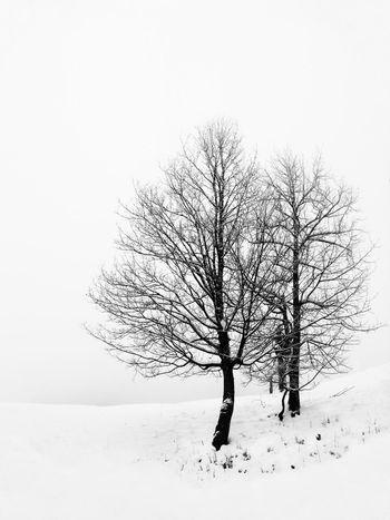 White Noir Et Blanc Monochrome Silhouette