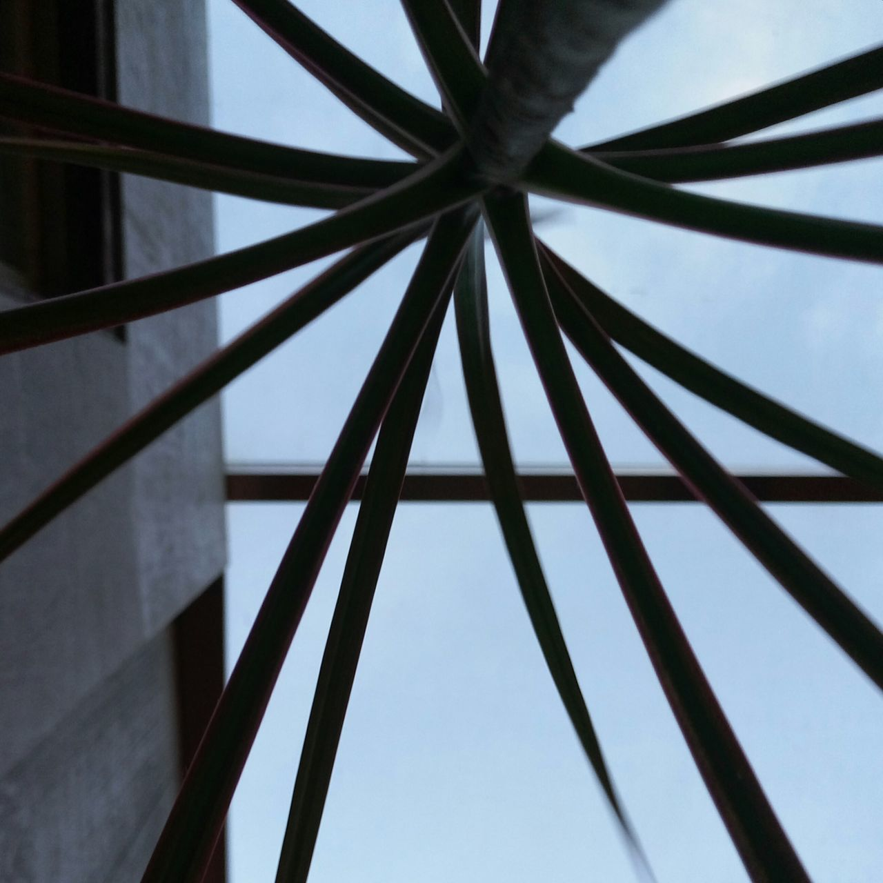 low angle view, day, pattern, no people, built structure, architecture, outdoors, close-up, sky