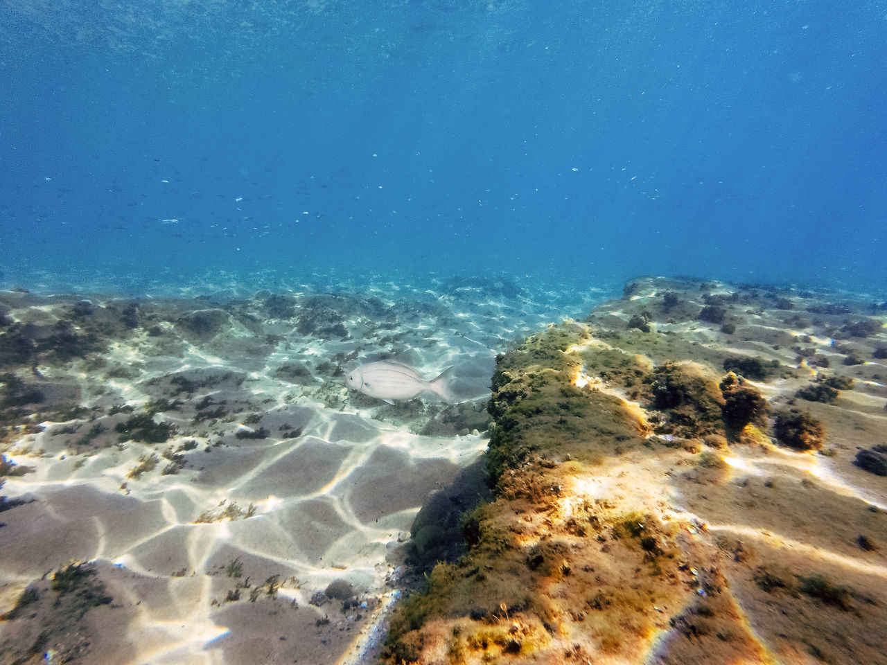 sea, nature, underwater, water, undersea, beauty in nature, no people, blue, day, outdoors