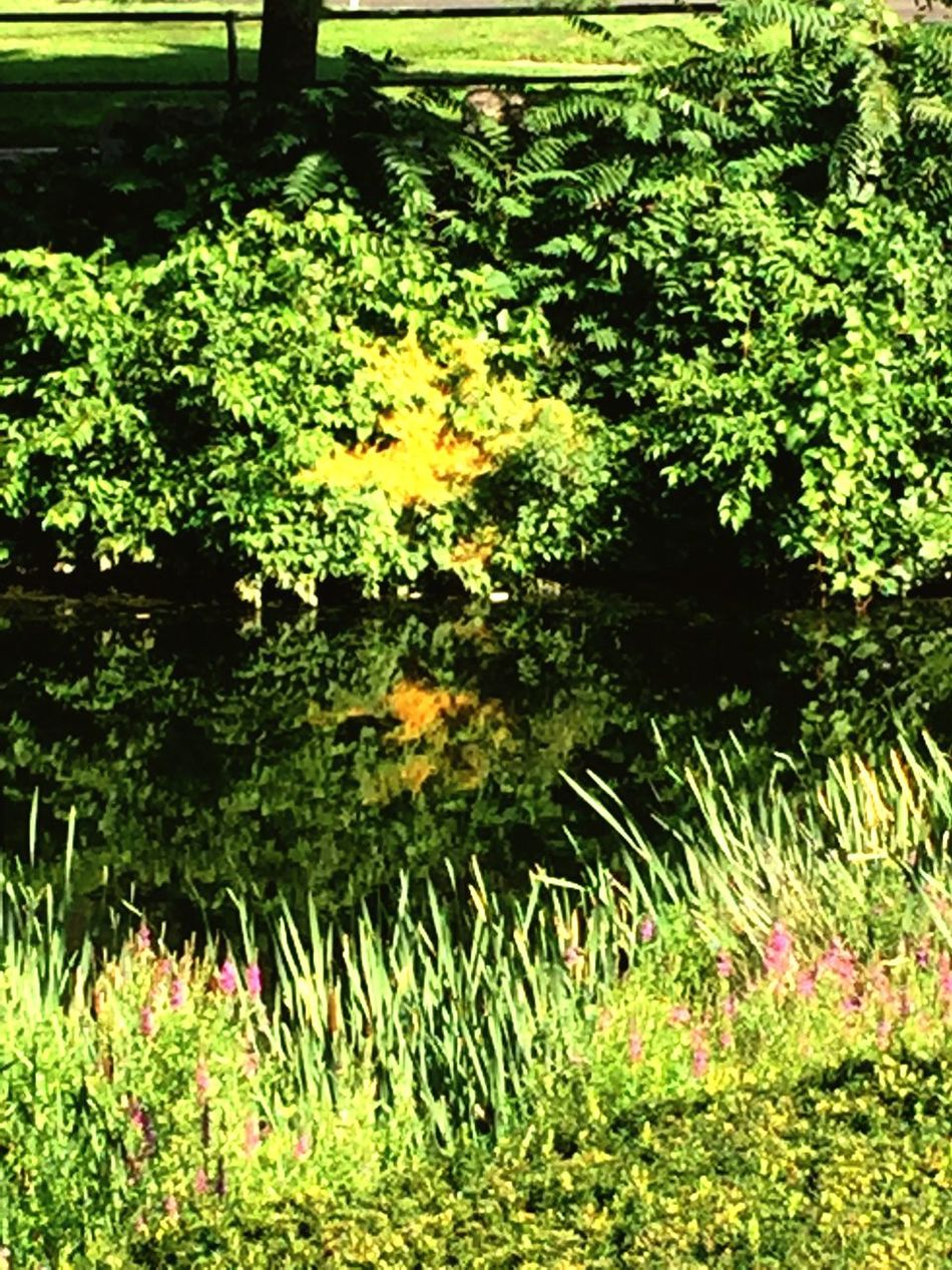 Flowers Beauty In Nature Beautiful Colour Of Life, Tall Grasses Water Reflections