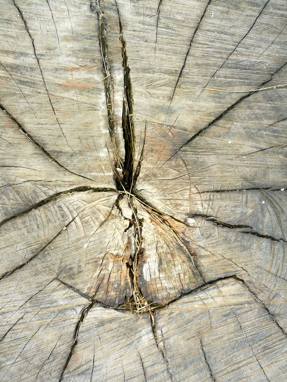 cracked, full frame, wood - material, no people, textured, tree ring, close-up, nature, backgrounds, tree, day, outdoors, plant, concentric