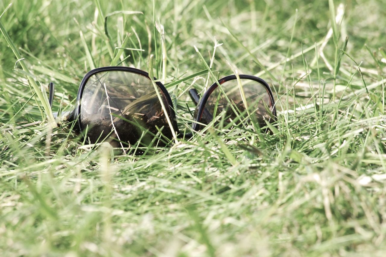 Sunglasses on Grassland Accessoires Brown Eyewear Garden Glasses Grass Green Holidays Lawn Meadow Park Reflection Relax Relaxation Summer Summertime Sunglasses Sunny Sunny Day Sunshine