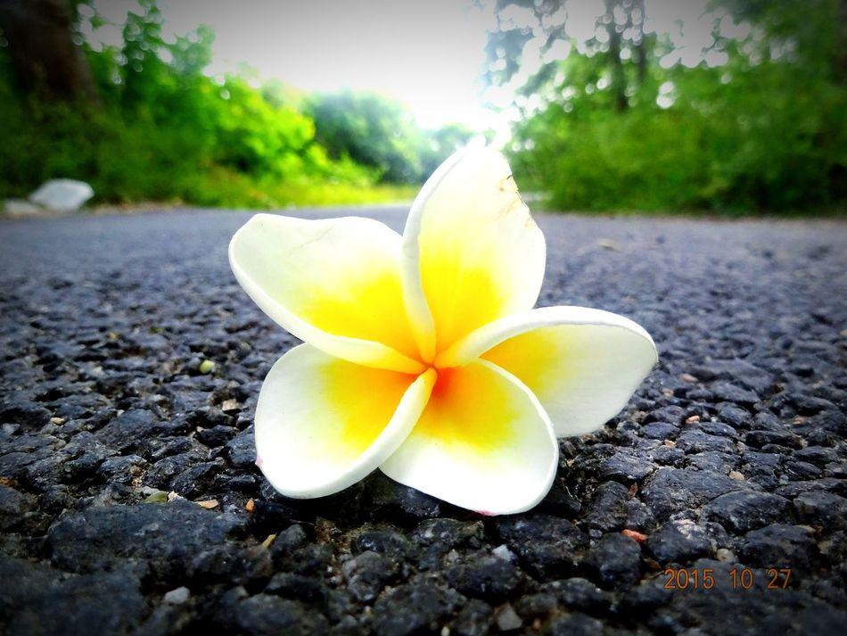 The Fallen Flower Showcase: January