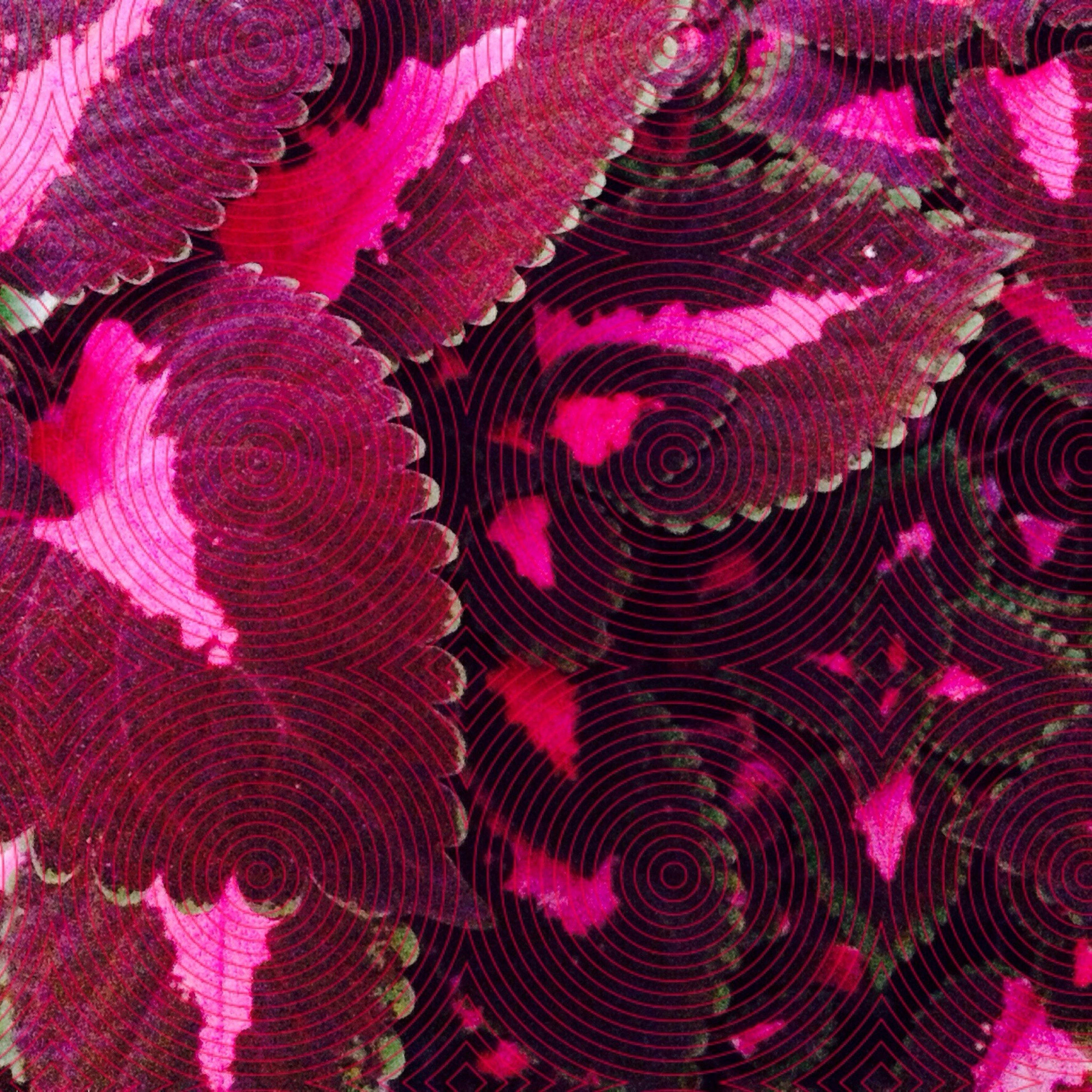 full frame, backgrounds, pattern, pink color, textured, indoors, design, close-up, textile, fabric, high angle view, natural pattern, red, floral pattern, multi colored, detail, no people, purple, still life, art and craft