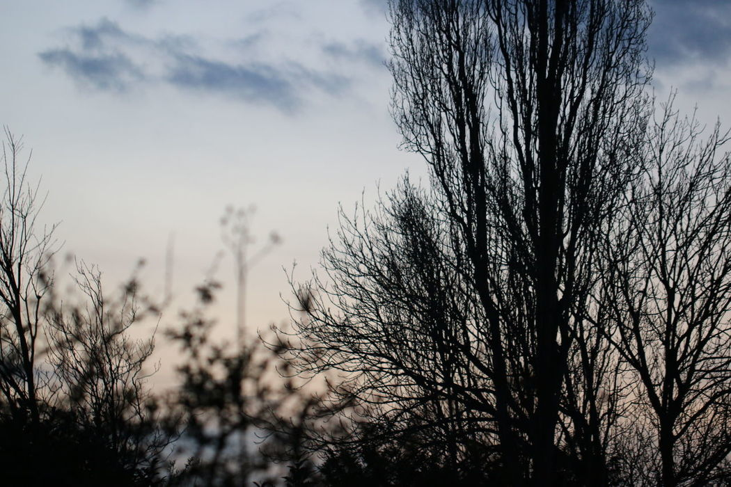 Taking Photos Getting Dark Getting Dark Here Night Photography Night Sky Nature Nature_collection Bare Tree Learn & Shoot: Balancing Elements Eyem Best Shots Nature_collection Eyem Nature Lovers