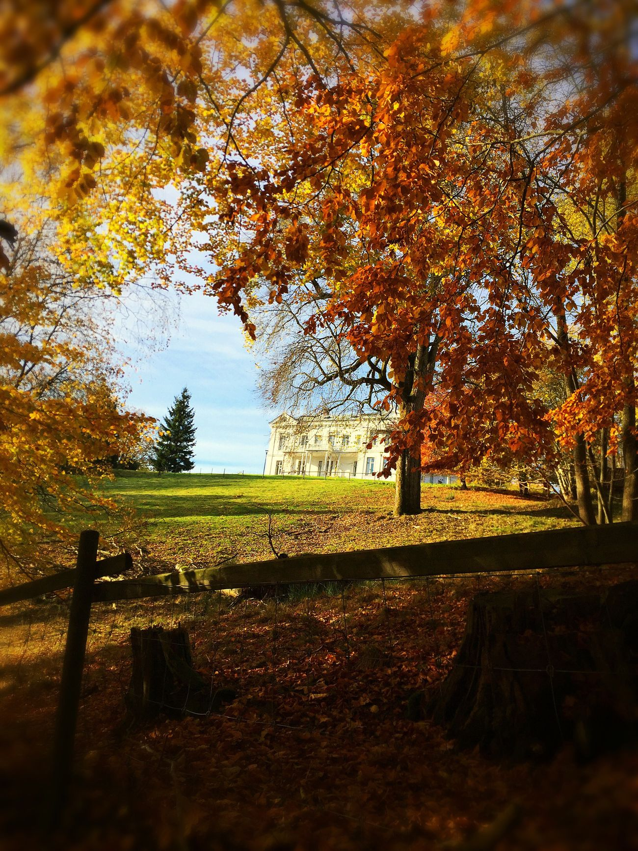 Autumn Tree Nature Sunlight Beauty In Nature EyeEm Nature Lover Beautiful Light Yellow
