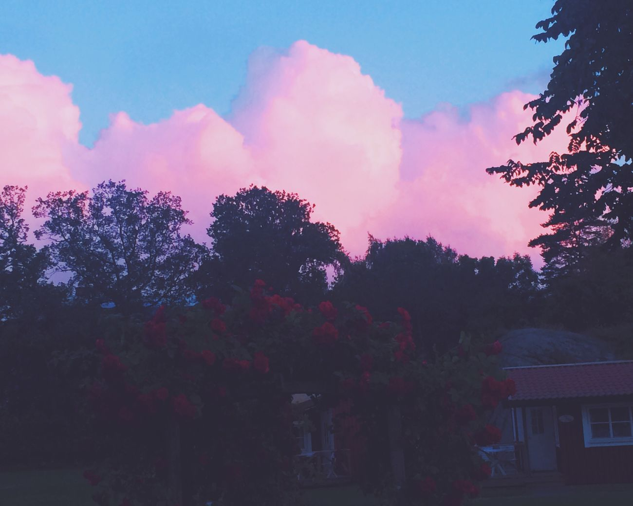 Pink Skies Colors Summer
