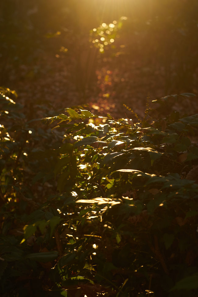 Atmospheric Mood Glowing Green Growing Leaf Light Reflection Shining Sunset