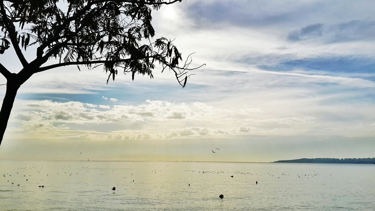 Sea Seagulls Sky Phoneography Relaxing Peace ✌ Deniz Enjoying The Sun