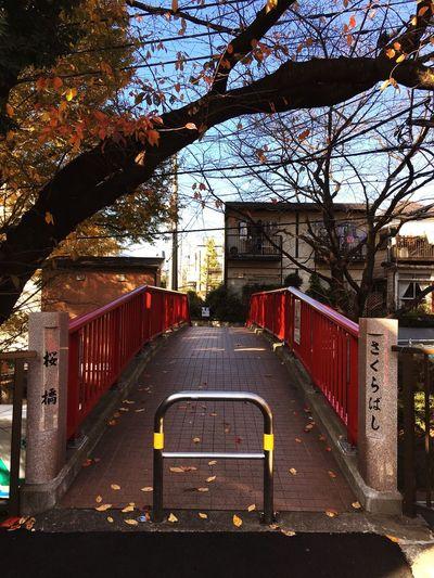 桜坂❤︎ Songs Beautiful Nature