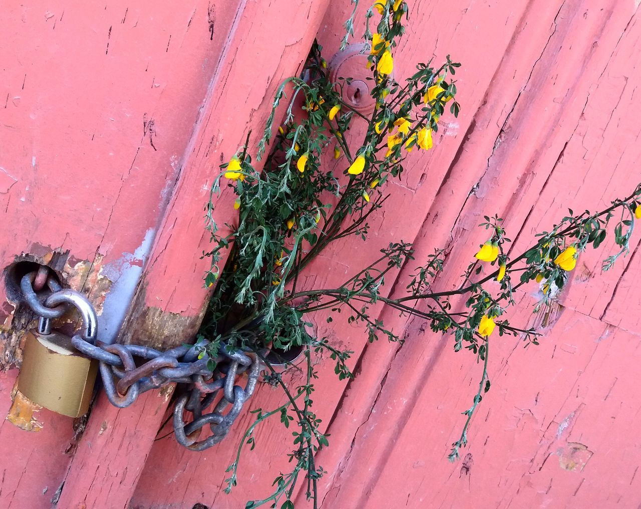 Eyeemporto Streetphotography Flowers Ghost Town Abandoned Places Maias Maio 1demaio Oportolovers Igers_porto Lovelyplanet Peloscaminhosdeportugal Ig_porto A_meu_ver Portugaldenorteasul Heritage Cultura Popular Culture
