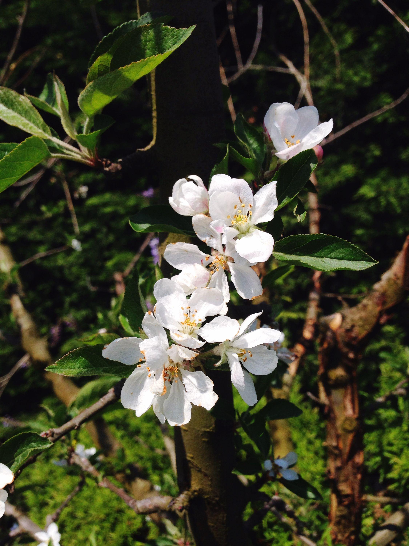 çiçek montessori paletmontessori çocukla bahçekeyfi güneş