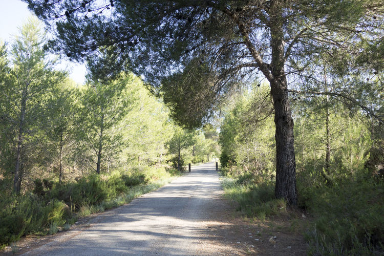Beauty In Nature Bike Castellón Cycling Day Forest Greenway Landscape Nature Nature No People Ojos Negros Outdoors Road Scenics SPAIN The Way Forward Tree València Via Verde Way