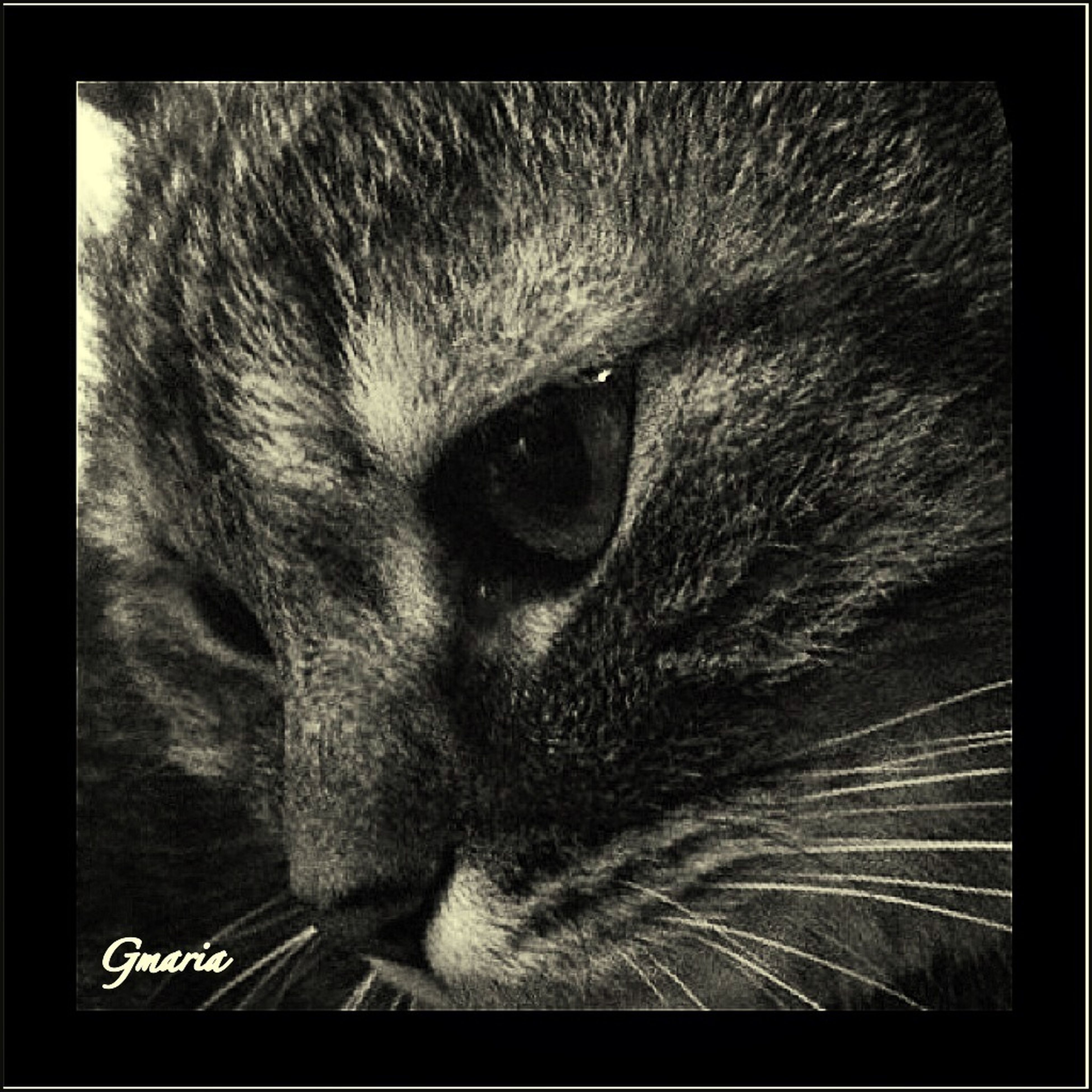 one animal, animal themes, domestic cat, cat, pets, domestic animals, feline, whisker, mammal, animal head, close-up, animal body part, animal eye, indoors, transfer print, staring, portrait, auto post production filter, looking at camera, zoology
