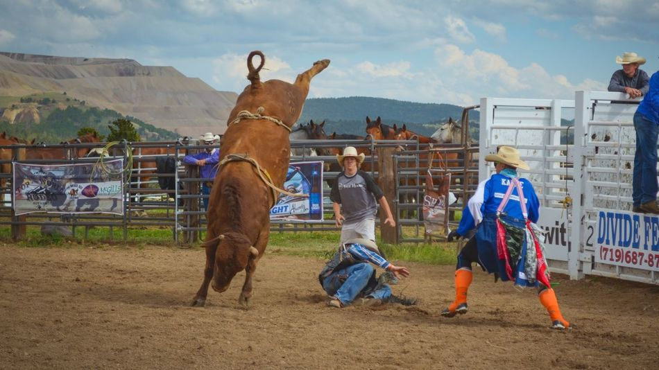 Animal People Outdoors Day Rodeo Courage Riding Domestic Animals Working Animal Nature Roping Horse Men Cattle Livestock Stand Up