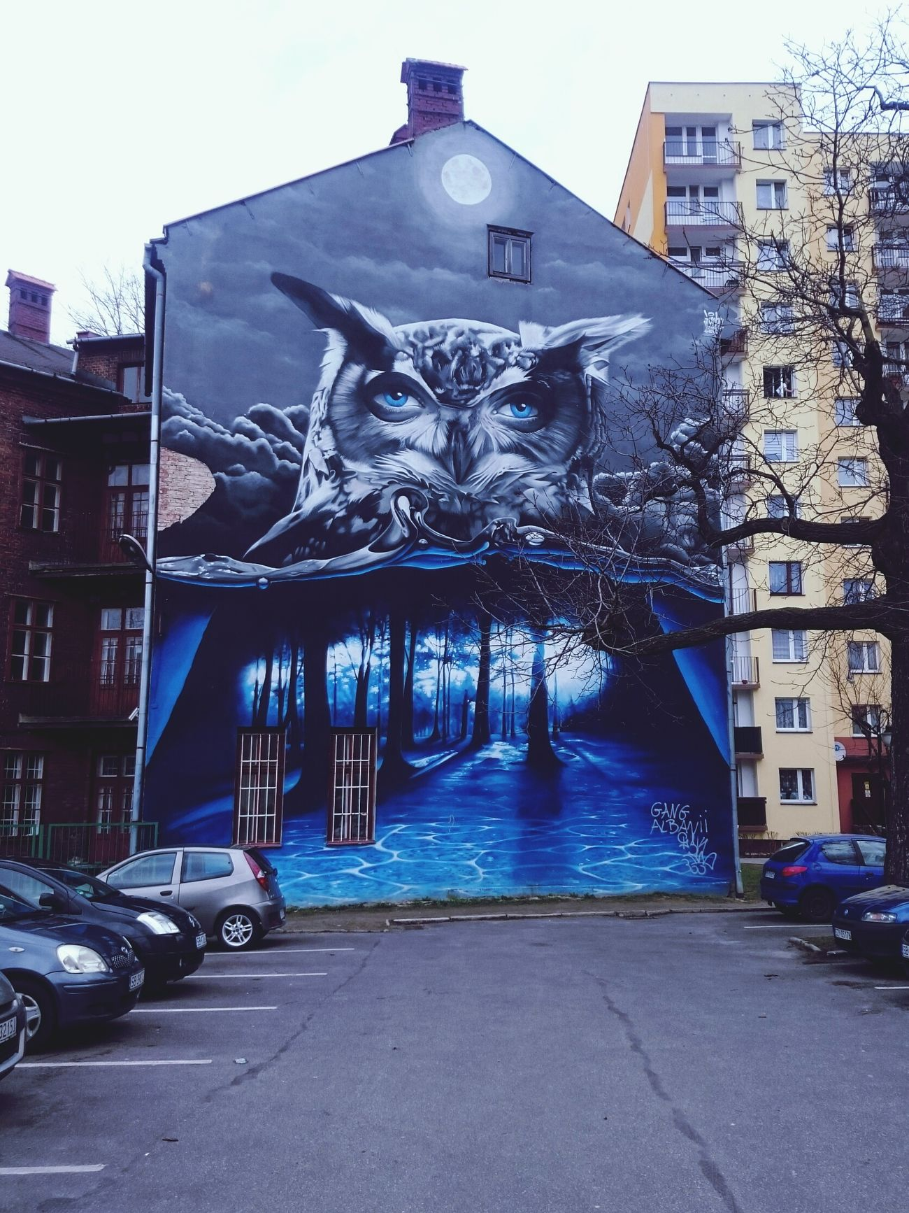 Street Art Multi Colored Architecture Creativity Owl Art Poland Bielsko-Biała