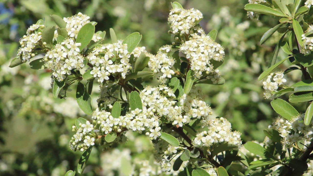 Close-Up Of White Flowers Blooming In Park