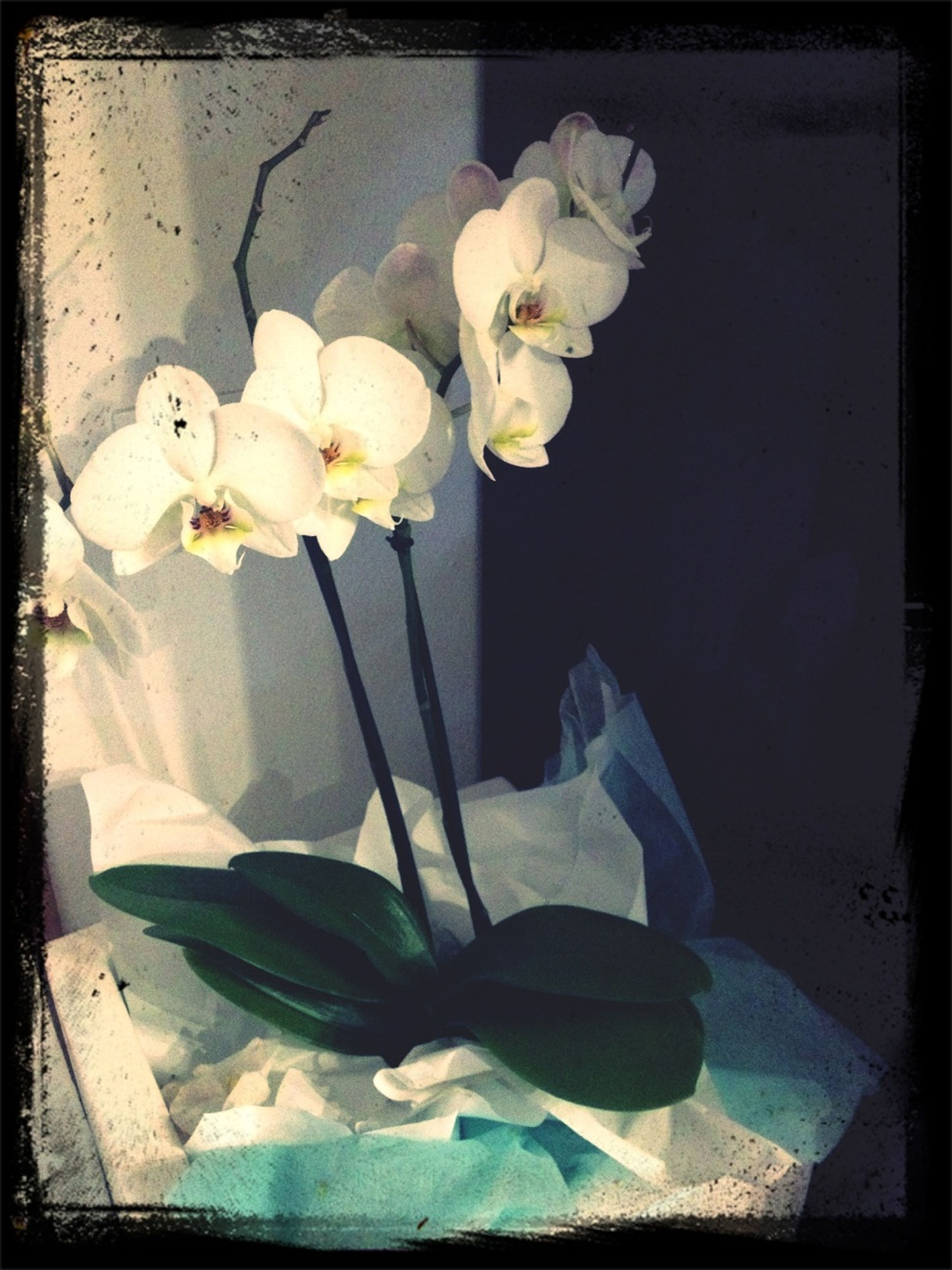 transfer print, flower, indoors, auto post production filter, vase, fragility, petal, table, freshness, flower head, close-up, plant, no people, stem, nature, still life, home interior, high angle view, growth, flower arrangement