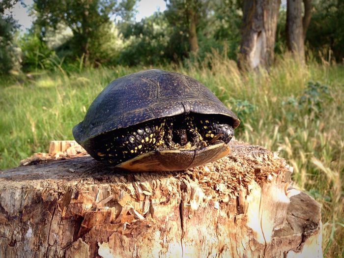 черепаха Turtle Turtles Turtle 🐢 Turtle Love
