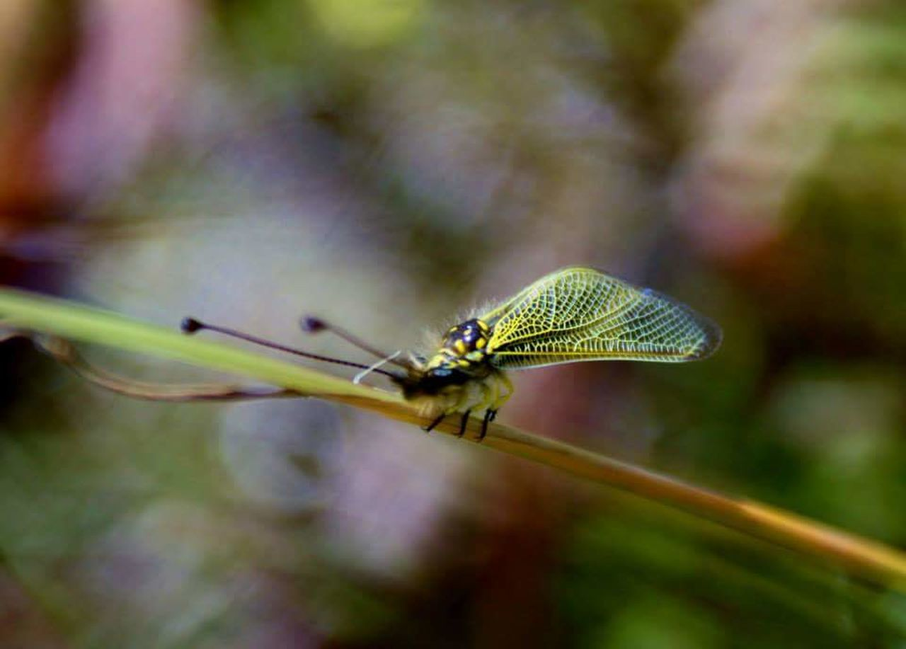 insect, close-up, animal themes, animals in the wild, focus on foreground, one animal, no people, nature, outdoors, day, leaf, plant, damselfly, beauty in nature