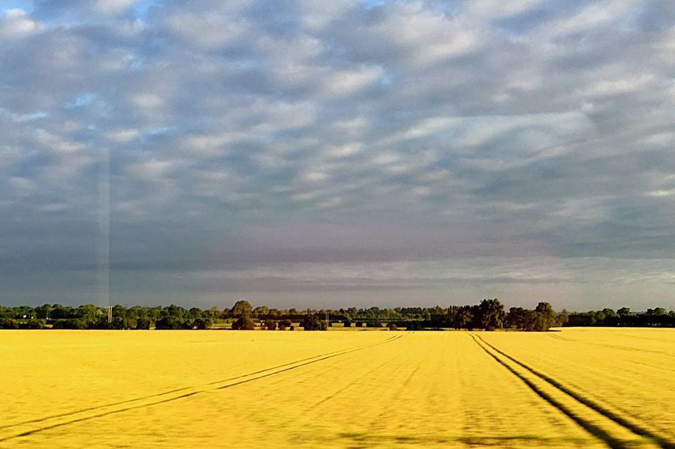 Field Fieldscape Fields Of Gold Fields And Sky Sky Cloudy Cloudy Sky Bright Yellow Yellowfield Yellow Field Landscape Landscape_photography IPhoneography Iphonephotography Frommovingtrain Shot From A Train Moving Train
