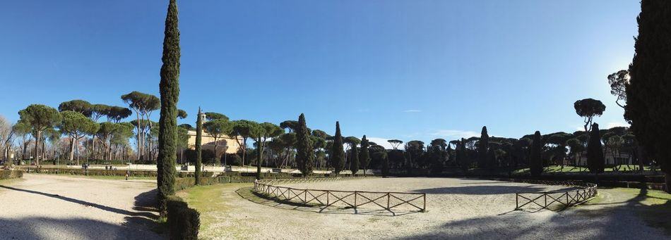 Panorama Park Rome Villa Borghese Park Tree Clear Sky Nature Beauty In Nature Growth Outdoors Day No People Sky Scenics