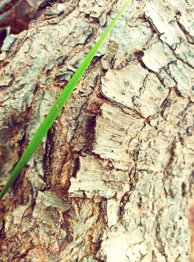 Verd Tree Trunk Textured  Outdoors Fragility Green Natura Nature_perfection Plants 🌱 Textured  Green Color Naturelovers Textured  Tranquility Strange Form Strange Forms Of Nature Formes Montañas❤ Muntanyes Tree Trunk Tree Caras Faces Of EyeEm Faces In Nature Faceslove