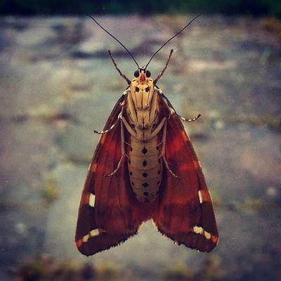 Moth..