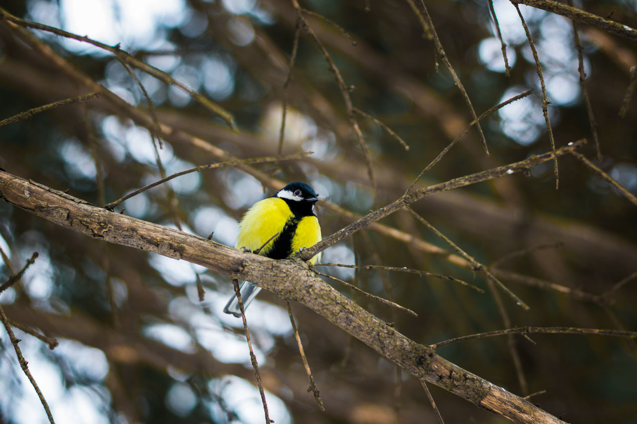 Animal Animal Themes Animal Wildlife Animals In The Wild Beauty In Nature Bird Branch Day Low Angle View Nature No People Outdoors Perching Tree