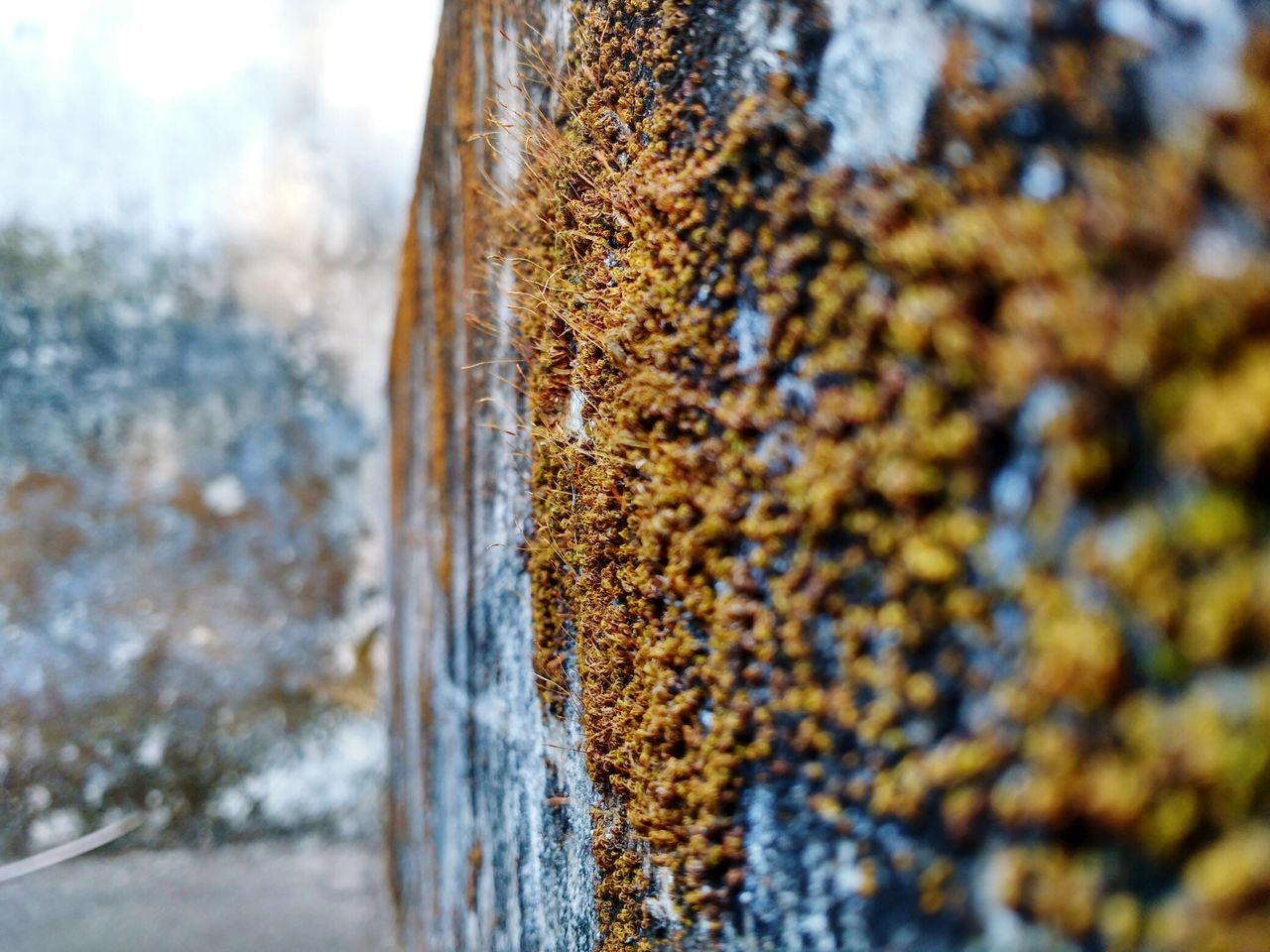 lichen, day, textured, selective focus, no people, close-up, outdoors, tree trunk, focus on foreground, rusty, nature, growth, tree