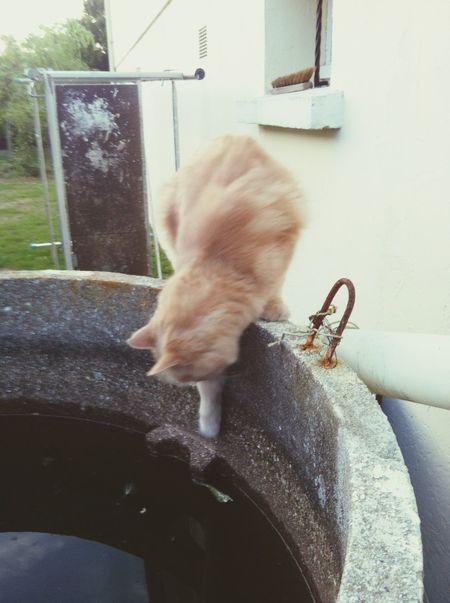 Be careful... Cat Normandy