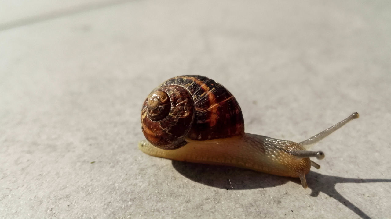 Animal Animal Antenna Animal Shell Animal Themes Animals Animals In The Wild Close-up Crawling Escargot Focus On Foreground Fragility Nature Nature No People One Animal Outdoors Snail Huawei Snail Collection Snails Snailshell Snail🐌 Surface Level Wildlife Zoology