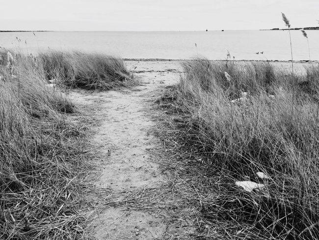 Pathways To Utopia The Beach  Ocean Eyemphotography Eyem