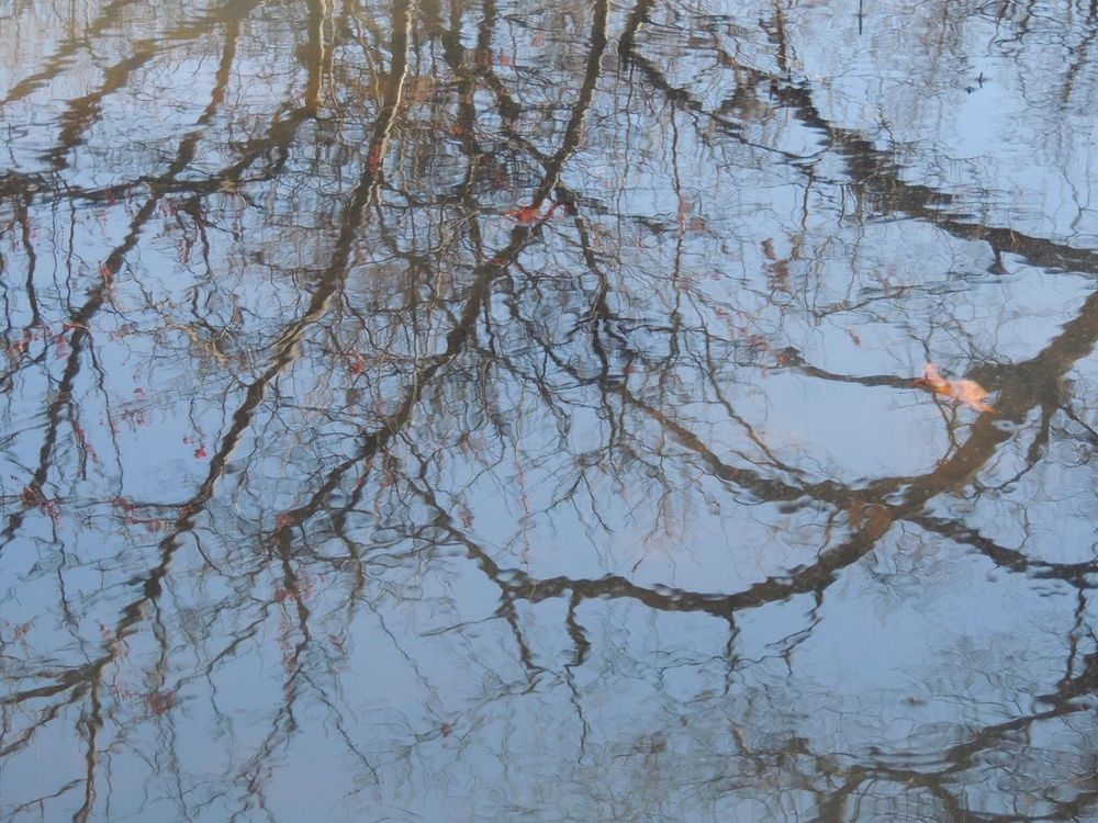 reflection on pond Nature Branch Beauty In Nature No People Backgrounds Day Outdoors Tree Tranquility Full Frame Water Close-up Sky First Eyeem Photo