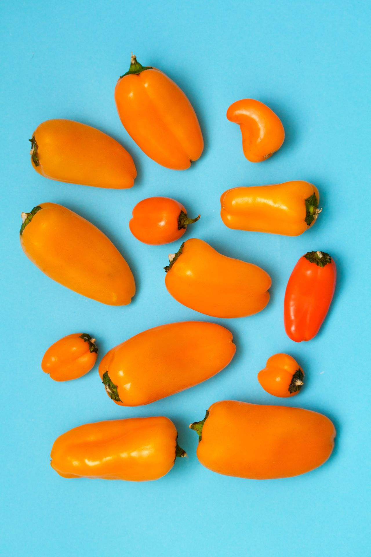 orange peppers on blue background Arrangement Blue Background Close-up Food Food And Drink Freshness Healthy Eating No People Orange Pepper Red Bell Pepper Studio Shot Vegetable Yellow Bell Pepper